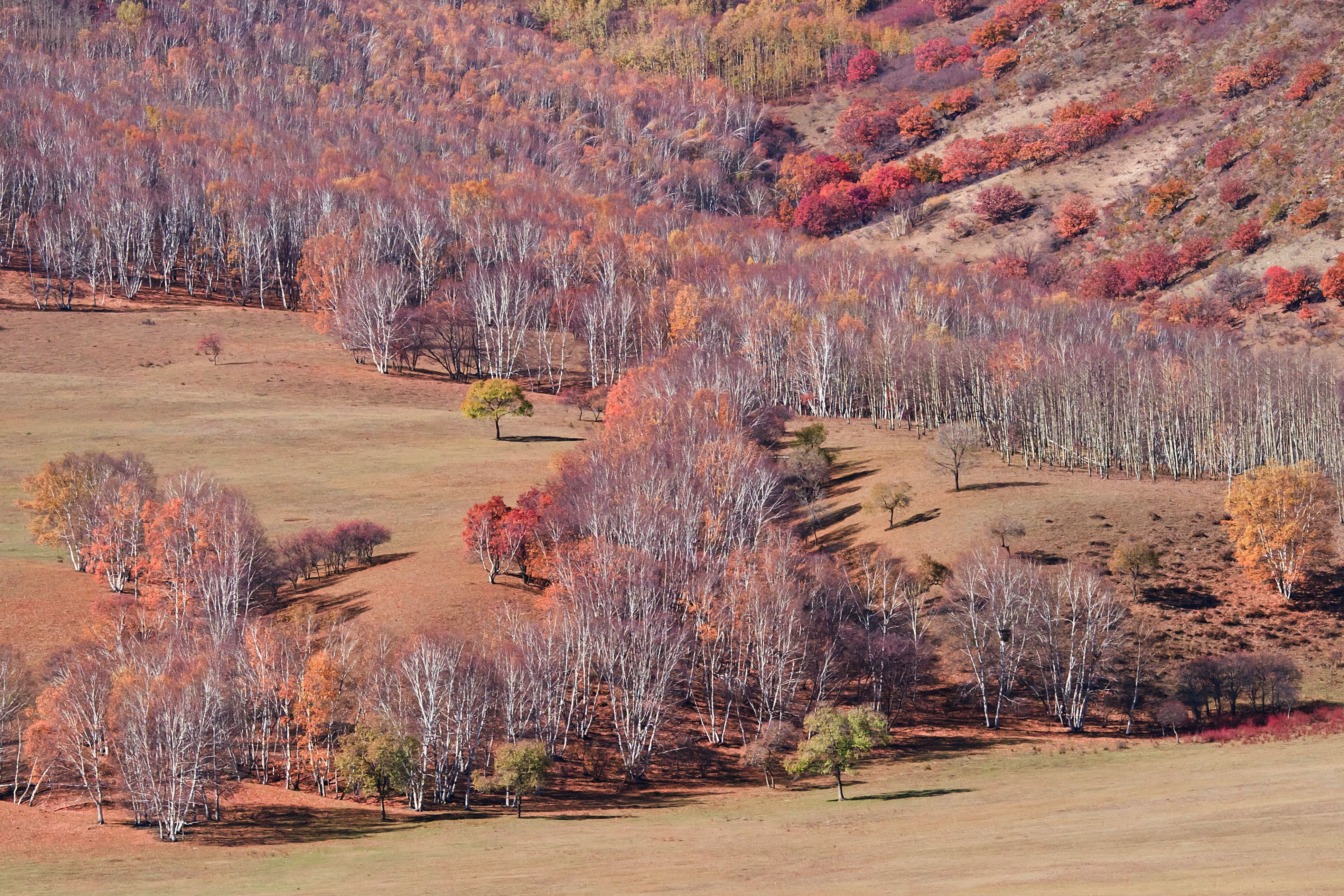 Enchanting red pastsel colors of autumn Mongolian steppe
