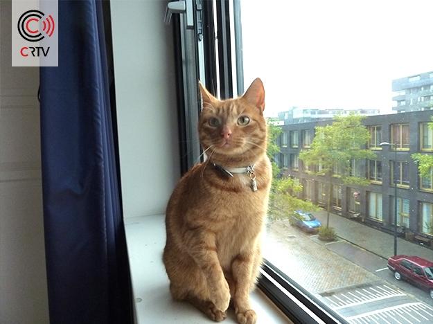 huisdieren-CRTV